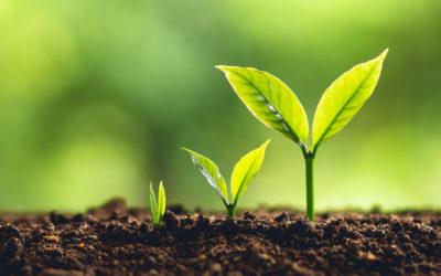 IT inzetten als middel voor bedrijfsgroei: zó doe je dat succesvol